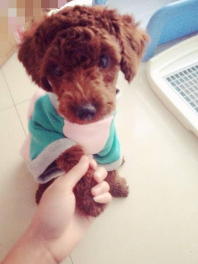 狗狗怎么握手?让狗狗学会握手的办法